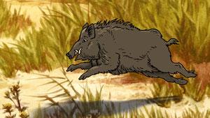 кабан убегает от охотников
