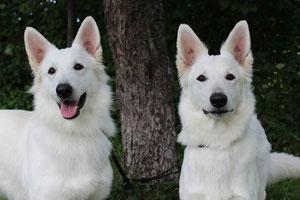 Baccus und Bonnie aus Schweden