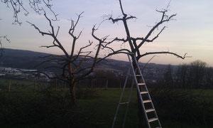 Obstbaumbeschnitt