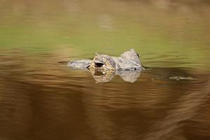 Brazil - Pantanal
