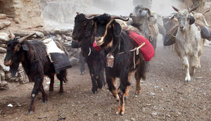 Glückliches Tsum Valley in Nepal