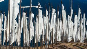 Reise Bhutan, Phobjikha, Thimphu