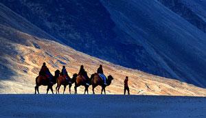 Kultur-Reise in Ladakh mit Nubra-Tal und Pangong See