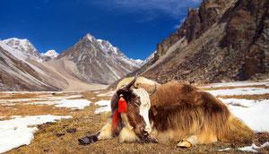 Laya Trekking, Snowman Trek und Rodung La in einer Reise