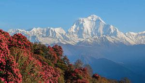 Lodgetrekking in Nepal zur Annapurna