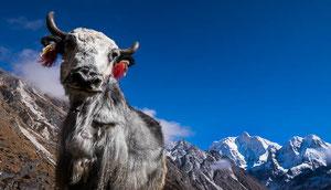 Trekking im Osten Nepals zum Kangchendzönga (Kangchenjunga)