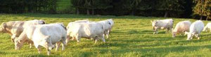 gallowayfleisch