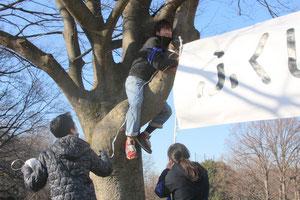 木の幹に高々と「ふくしまっ子」横断幕を掲げます。