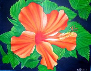 hibiscus sous le soleil