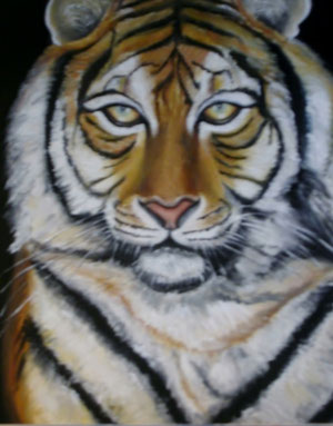 tigre royal