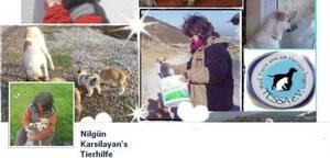 Nilgüns Tierhilfe, Tierschutz Türkei, Tessa e.V.