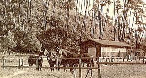 石芝号 夏高号 畑高号 花車号 (50m×70mの馬場?)