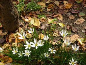 枯れ葉と花