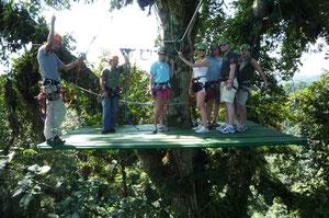 Cables sobre el bosque