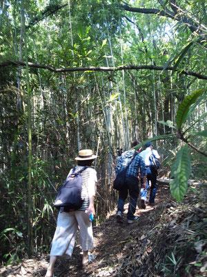 竹林を通り過ぎ