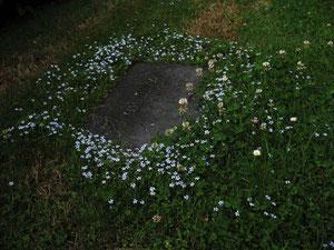 Blauer Bubikopf auf dem Kellersberger Friedhof (Foto: Wolfgang Voigt)