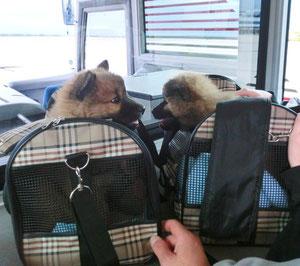 Ronja & Mexx nach dem Flug am Airport Vienna