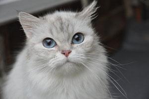 Shiva (5 ans) - FA Stéphanie