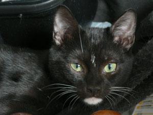 Mortimer (7 mois)