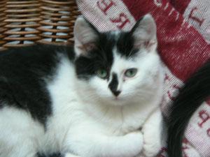 Namie, ex-Monoï (3 mois), adoptée avec Syrius