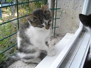 Viviane (3 mois)