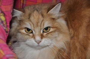 Melba (3 ans)