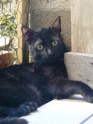 Lucky, 9 mois, adopté par sa famille d'accueil