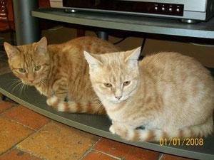 Némo (8 mois), à gauche sur la photo, rebaptisé Bigorneau