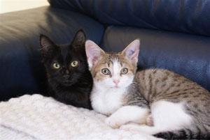 Flora et Flash (3 mois et demi), adoptés ensemble