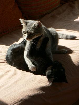 Syrius (8 mois), le petit noir, adopté avec Monoï
