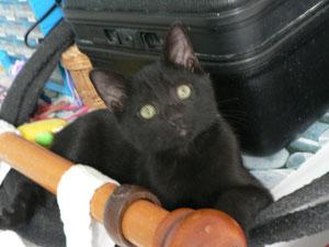 Blake (6 mois), adopté avec Cliff (7 mois)