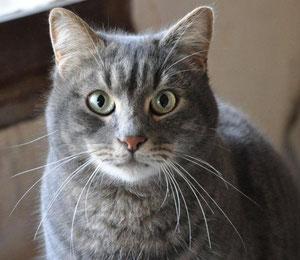 Léon (5 ans)