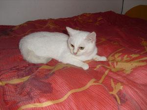 Zélie (4 mois)