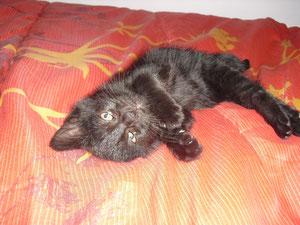 Merlin (2 mois et demi)