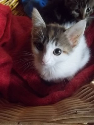 Pirouette (8 mois)