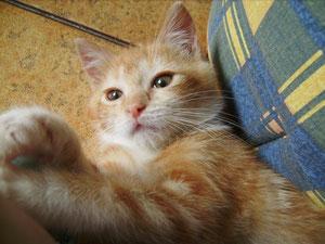 Oliver, 3 mois