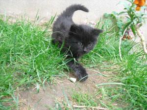Effia (2 mois)