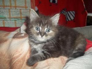 Nina (4 mois)
