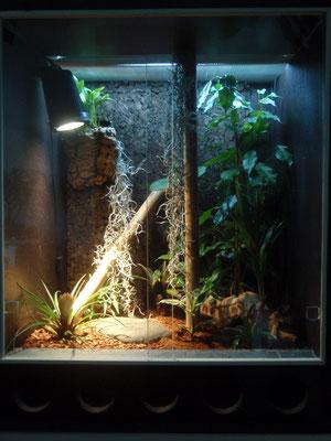 Terrarium jungferngecko