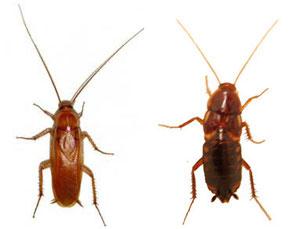 Runners. Macho y hembra. El macho es alado, la hembra no.