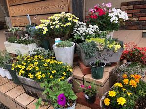 臨時休園中ですが、保育園のお花は満開です!          先生たちもお花も、みんなと会えるのが楽しみです。