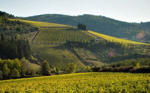 Tignanello - Vini Della Valle