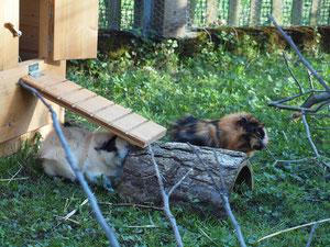 Lilly und Chipsy