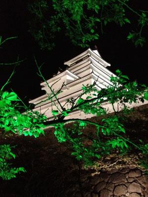 散り桜にグリーンライト