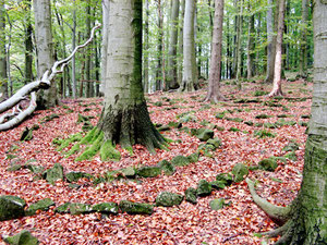 """""""altes"""" Labyrinth im Wald"""
