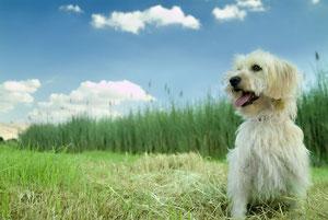 Dog Walking Bicester with Pet Buddies