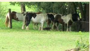 Manege, paardrijden dichtbij het vakantiehuis