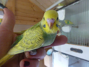 Dieser Vogel ist evtl. für Tanja Z, aus Elsdorf bei Kölle