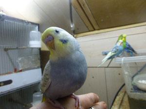 Dieser Vogel gehört Armin