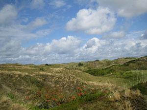 Ausflug auf die Insel Spiekeroog - nur 8 km bis zur Fähre vom Ferienhaus Nordseeufer